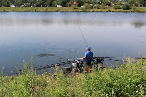 Karpie na sportowym rybniku Kruki nie są wielkie, ale niezwykle silne